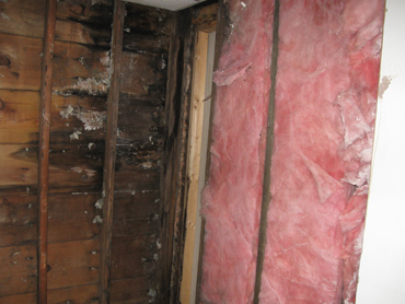 Mold Removal - During